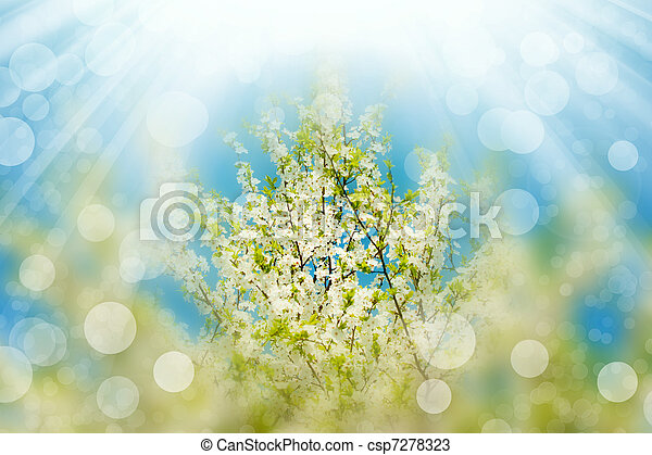 Blossoming branches tree with sun light - csp7278323