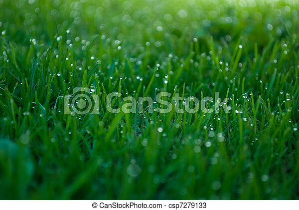 Water rain droplets blades of grass - csp7279133