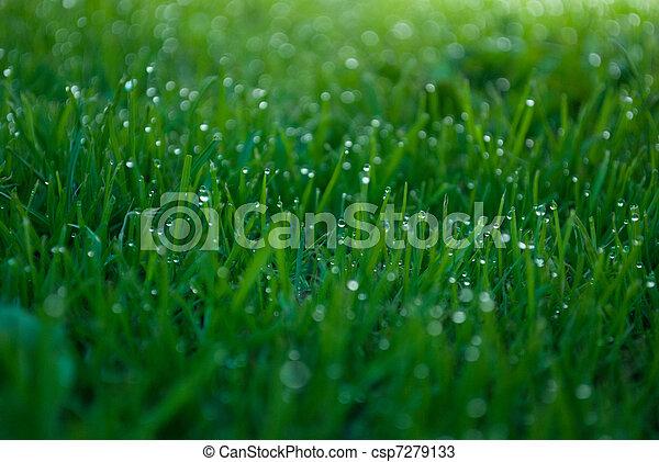 Water rain droplets blades of grass - csp7279133