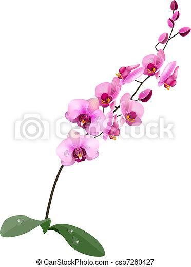 illustrations et cliparts de orchidée. 8 850 dessins et
