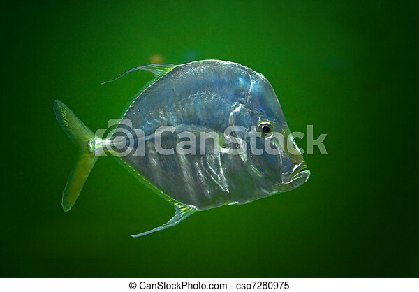 Stock images of naso vlamingii a big nose fish against for Big nose fish