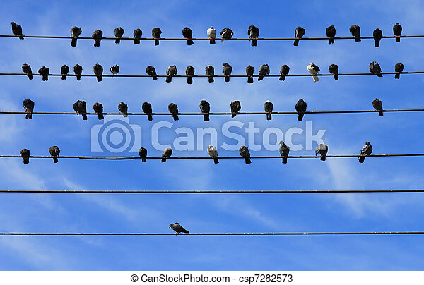 Pigeons on Electric Wire - csp7282573