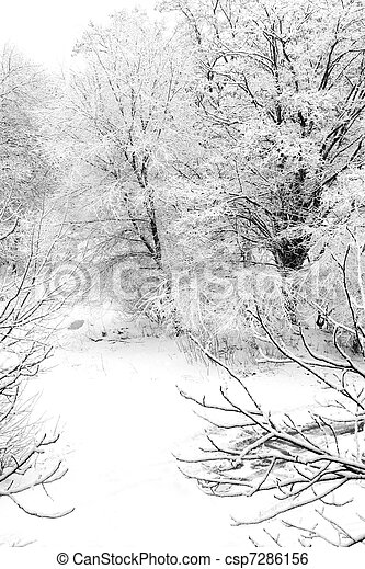 winter scenery, snow covered trees - csp7286156