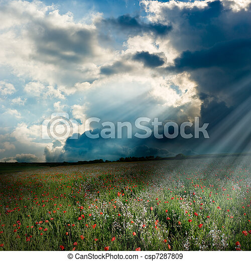 Poppy field with god rays - csp7287809