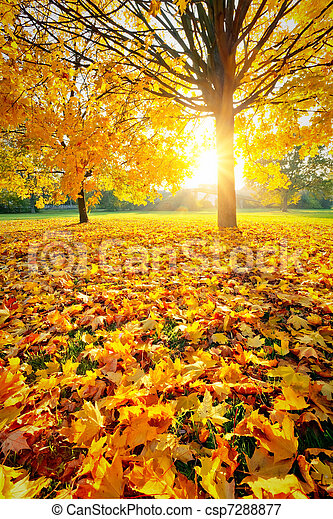 Sunny autumn foliage - csp7288877