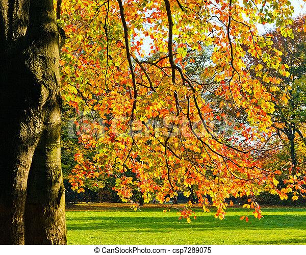 Sunny autumn foliage - csp7289075