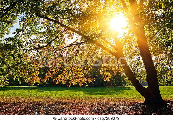 Sunny autumn foliage - csp7289079