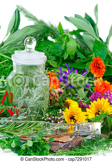 Herbs for medicine or cooking fresh from the garden - csp7291017