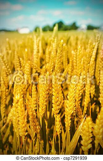 landwirtschaft, landschaftsbild - csp7291939