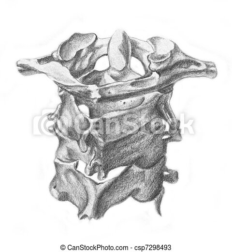 human anatomy - cervical vertebrae - csp7298493