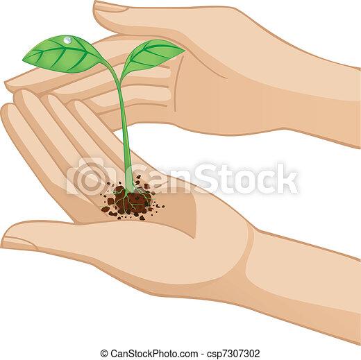 Hand holding plant - csp7307302