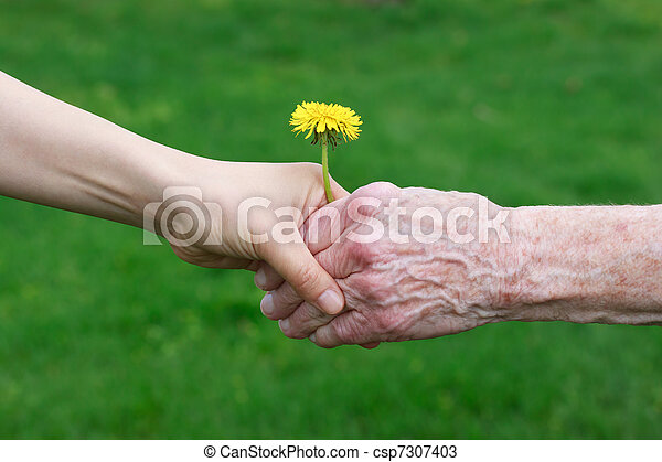 Young and senior's hands holding a - csp7307403