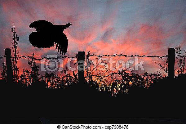 Wild Turkey Takes Flight - csp7308478