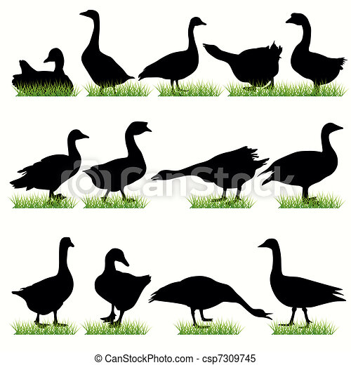 12 Gooses Silhouettes Set - csp7309745
