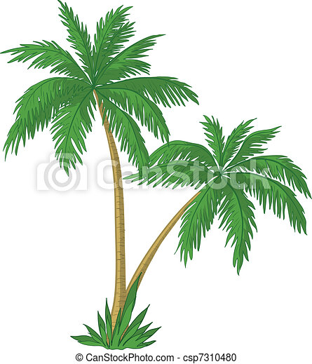 Vector Clipart of Palm trees  Vector, palm trees with green leaves on
