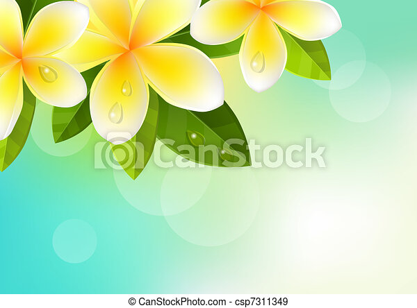 Tropic blue background with frangipani flowers - csp7311349
