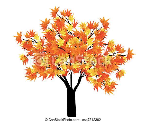 Maple Tree Drawing Maple Tree Pattern of Autumn