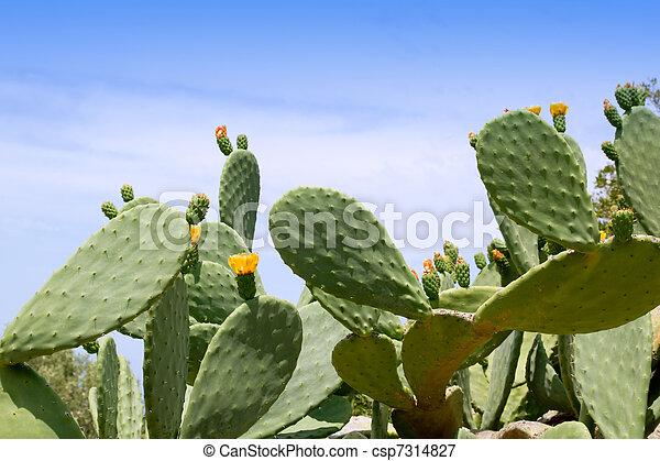 bilder von pflanze mittelmeer chumbera kaktus nopal typisch csp7314827 suchen sie. Black Bedroom Furniture Sets. Home Design Ideas