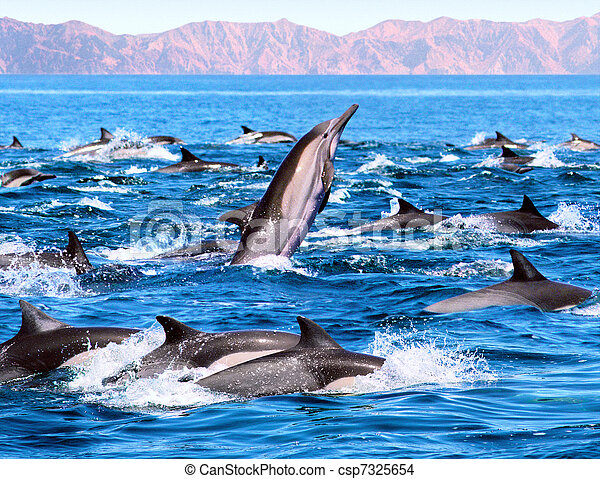Dolphin Patrol - csp7325654