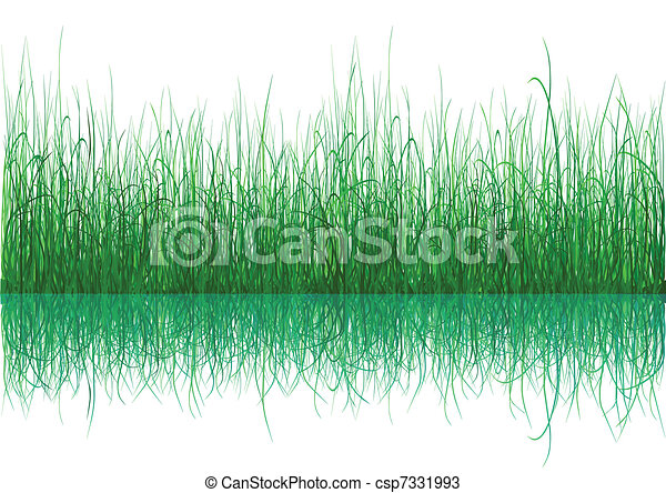 Green Grass - isolated on white - csp7331993