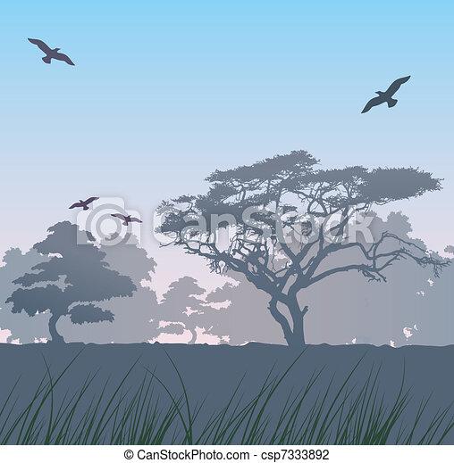 forest at sunrise - csp7333892