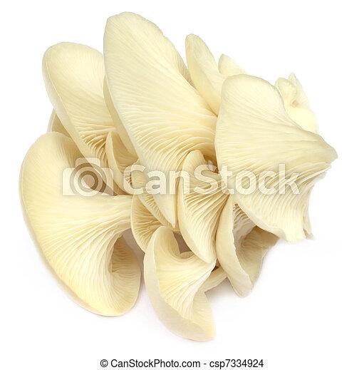 Oyster mushroom - csp7334924