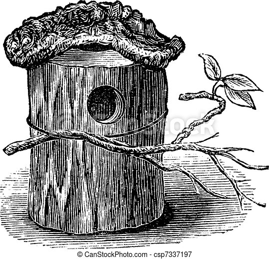 Parakeet Nest made of Hollow Tree Trunk, vintage engraving - csp7337197