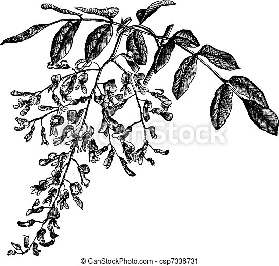 Rock Rimmon also Cipher Wheel Printable likewise Drawings Palm Tree Dwg Dxf 66 together with Betula moreover Fall Leaves Clipart Black And White Border 1954. on foliage top view