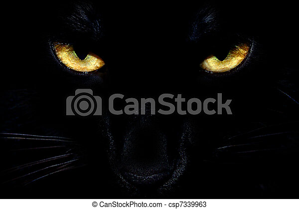 Black Cat Eyes - csp7339963