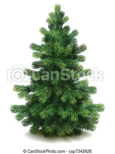 Pine tree - csp7342628