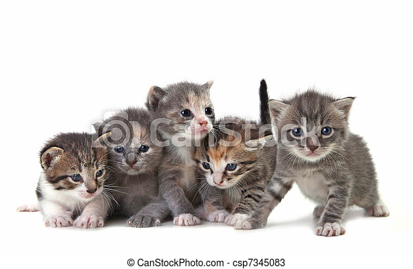 Cute Newborn Baby Kittens Easily Isolated on White - csp7345083