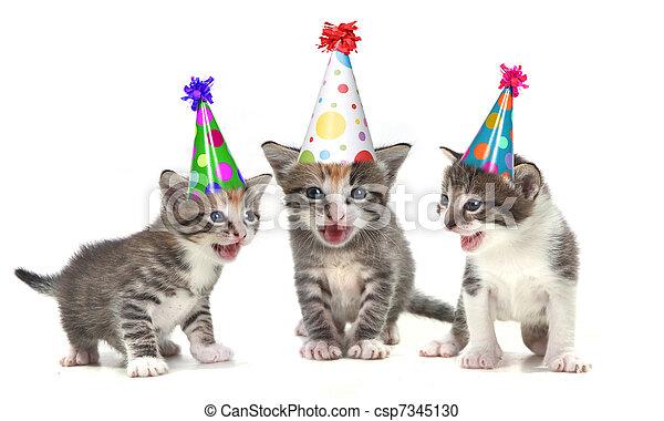 Kittens Birthday Song Birthday Song Singing Kittens