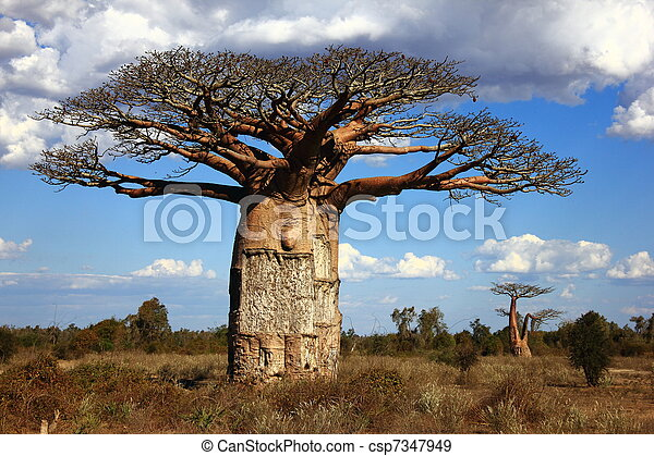 savann