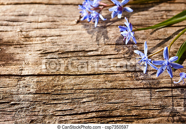 Woodland spring flowers - csp7350597