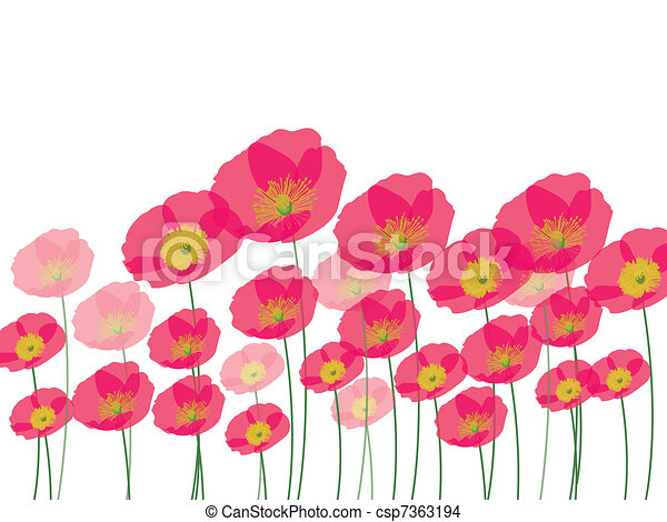 Row of poppy flowers isolated on wh - csp7363194