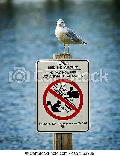 Seagull Perched Atop Do Not Feed Wildlife Sign - csp7363939