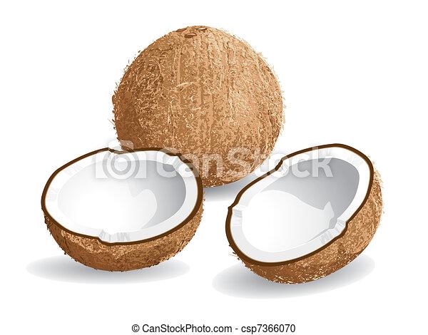 Coconut - csp7366070