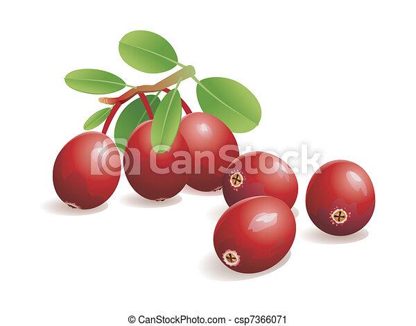 Cranberry Fruit - csp7366071