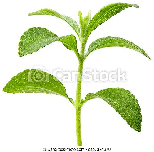 Stevia plant cutout - csp7374370