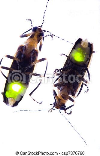 Fireflies Flashing - Lightning Bugs - csp7376760