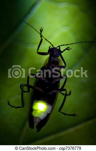Firefly Flashing at Night - Lightning Bug - csp7376779