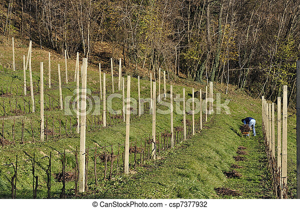 winter work in vineyard, lombardy - csp7377932