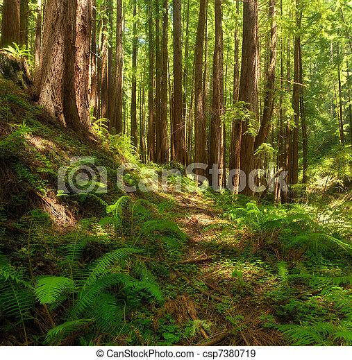 Dreamy California Redwoods - csp7380719