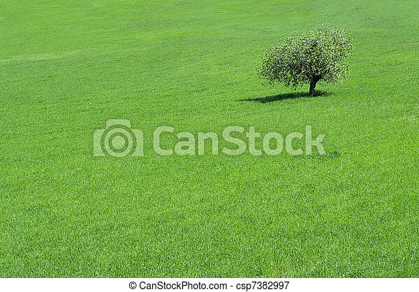 green field with a solitary  tree growing - csp7382997