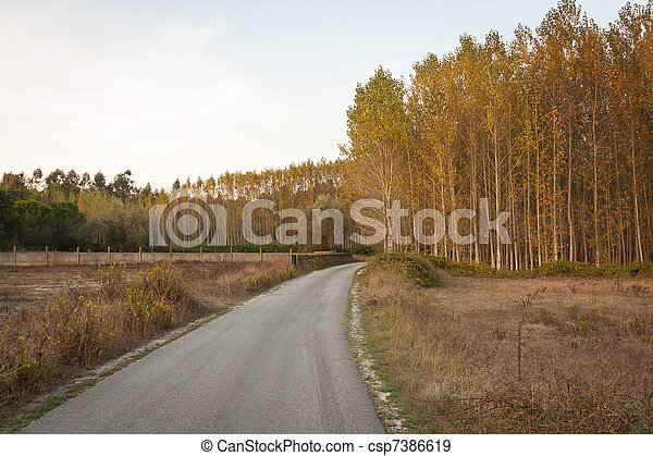 Secondary road by woods at dusk in Portugal  - csp7386619