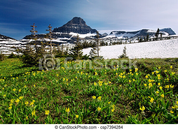 Spring Wildflowers in Glacier National Park  - csp7394284