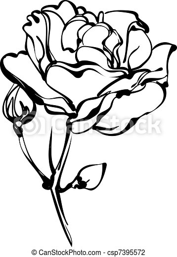 white roses in bud on a white background - csp7395572
