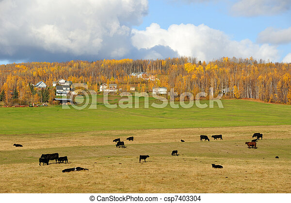 Alaska Cattle Ranch in Fall - csp7403304