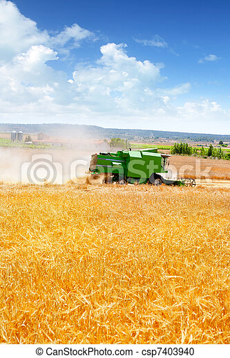 Combine harvester harvesting wheat cereal - csp7403940