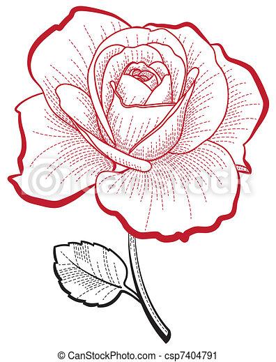 Clip art vecteur de rose dessin main illustration de a main dessin csp7404791 - Roses dessins ...